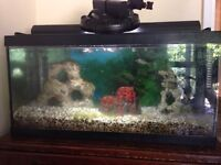 Fish tank and fish community