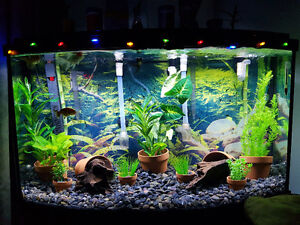 45g bow front set up