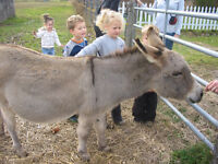 "I CAN-T.E.R. MARCH BREAK CAMP- ""Fun on the Farm!"""