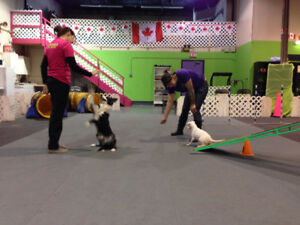 Rally Classes starting at Dynamo Dogsports