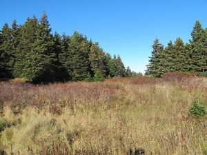 For sale 1.84 acres of land in lovely in Chapels Cove, NL St. John's Newfoundland image 7