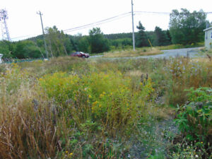 Land For Sale in Brigus! Home of the Brigus Blueberry Festival!