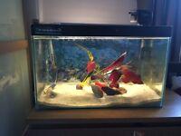 Fish tank 80 l