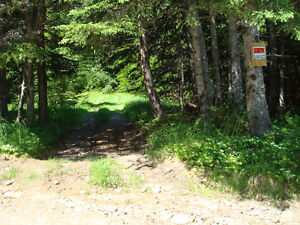 3 acres of land with cabin in Bear Cove White Bay