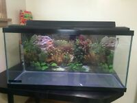 30 gallon aquarium (fish tank)