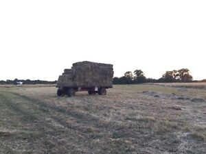 First Cut Timothy/Alfalfa Mix Hay $5/bale