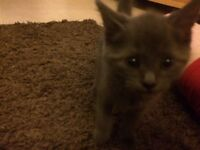 Kittens for sale ready to go