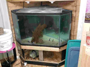 90 gallon Corner tank with stand