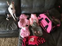 Pet clothes and bag. Everything for $45