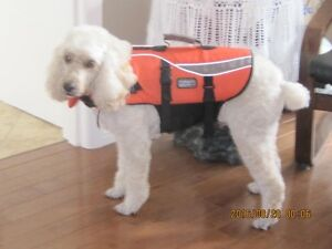 Outward Hound Life Jacket New Price $40.00