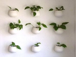 ISO plant clippings or unwanted plants
