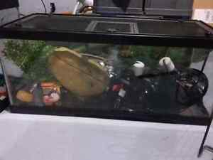 Selling 20 gallon tank with accessories