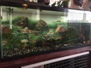 55 gallon fish tank with fish