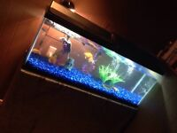 New! 50Gallon Tank With Fish and Turtle