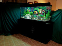 LUXUEUSE AQUARIUM 90 GALLONS, EQUIPÉE ET SUPER PROPRE !