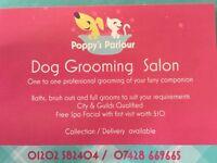 Dog groomer taking bookings
