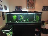 6ft Tropical fish tank