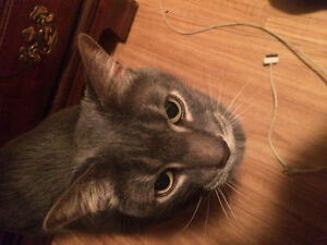Needed temporary home for adult cat
