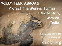 Protecting the Marine Turtles in La Penita, Mexico