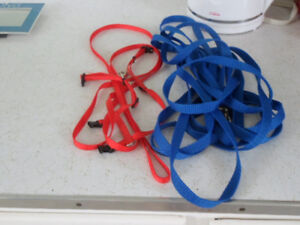small dog/cat harness and lead.