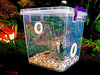 Praying Mantis,Stick Insect,Arboreal Vivarium.Cage,Tank,Enclosure (Twin Vented)