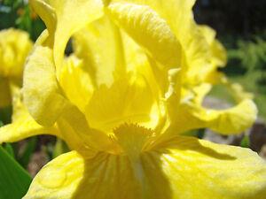 Iris deep tissue relaxation massage Edmonton Edmonton Area image 2