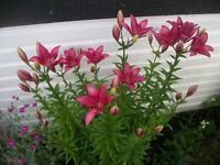 PERENNIAL PLANTS   $1 TO $10