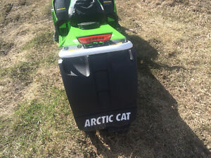 Mint Amazing Cat Edmonton Edmonton Area image 6