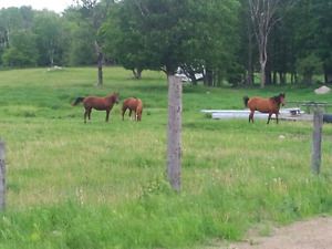 Three horses for sale