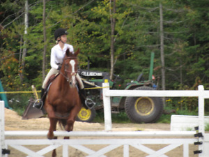 looking for small barn to ride and work at