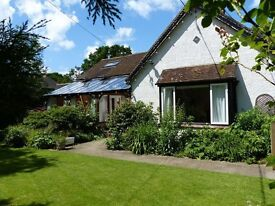 Lovely character semi detached house in Ewhurst, 3/4 bed, 2/3 reception, available 10th July, garden