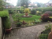Large selection of garden plants/ trees/bushes