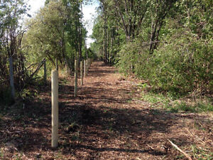 Mulching,selective brush clearing,fencing Strathcona County Edmonton Area image 3
