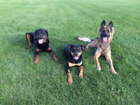 Experienced Dog Walker/Pet Sitter Available