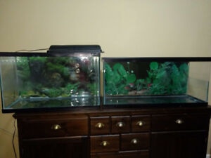 2 Aquariums for Sale Low $ with heating Lamps