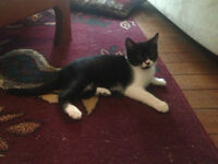 Loving Kitten - new addition to home
