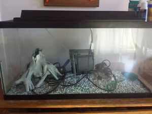 40 gallon Fish tank