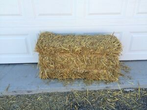 Straw for sale in Nepean
