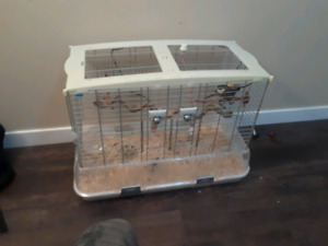 3 year old Cackotiel Parrot for sale