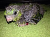 bébés touis catherine verts nourris à la main