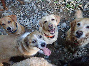 Dog Walking Nanaimo to Parksville, Pet Sitting & Puppy Care