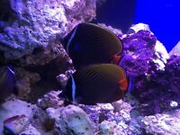 Marine live rocks,corals, and fishes for sale fish tank aquarium reef