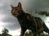 Missing cat (Finn)