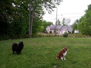Pension pour chien en milieu familial (sans cage)