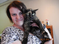 "FRIENDLY TORTI ""PAULINA"" -- Fixed & Vaccinated -- @ Small Things"