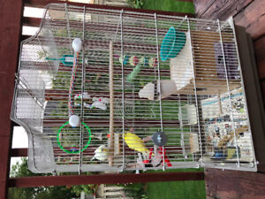 Beautiful Parakeets for sale