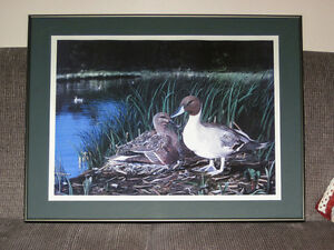 Pintail Paradise framed numbered print
