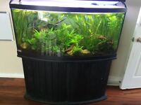 90 gal bow front with stand and filter