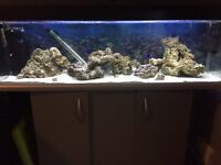 REDUCED!! Complete set up! Marine fish tank, live rock, fish and more..