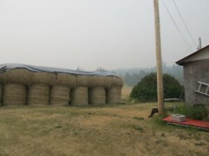 20 Round Bales of Hay av. 1500 bounds +